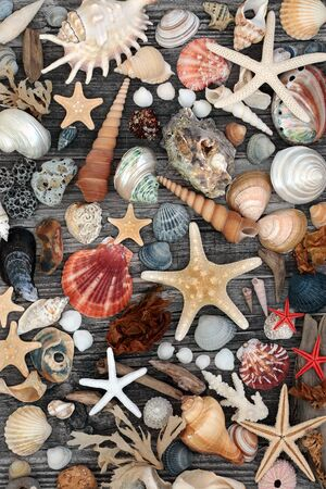 Driftwood, seashell, seaweed and pebble abstract collage on a rustic wood background. Flat lay. Reklamní fotografie