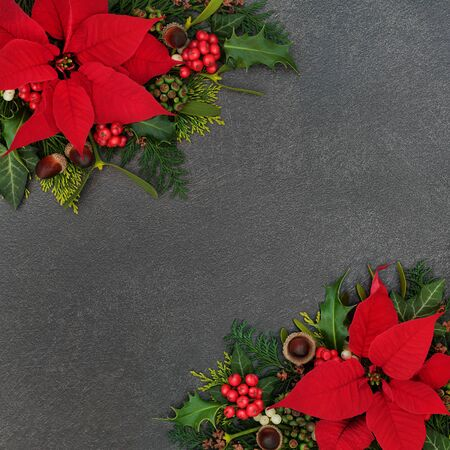 Poinsettia flower border with winter flora of holly, cedar and ivy leaves, mistletoe and acorns on grunge grey background. Festive theme for Thanksgiving and Christmas.