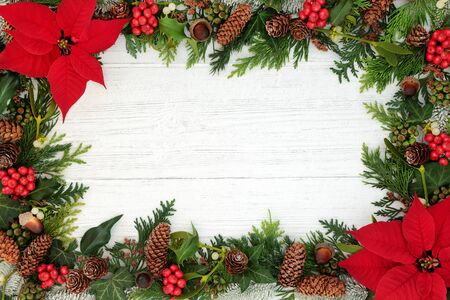 Poinsettia flower background border with holly, mistletoe and winter flora on rustic white wood background with copy space. Traditional Thanksgiving or Christmas theme. Standard-Bild