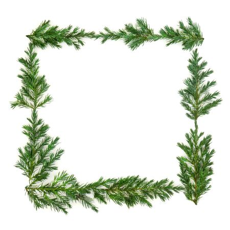 Juniper fir leaf border wreath on white background with copy space. Stock Photo