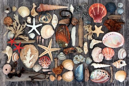 Driftwood, seashell, seaweed & pebble abstract collage on rustic wood background. Flat lay, top view.