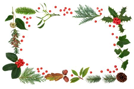 Winter flora & fauna with loose holly berries forming an abstract border on white background with copy space. Traditional natural greenery for the festive Christmas season & New Year. Standard-Bild