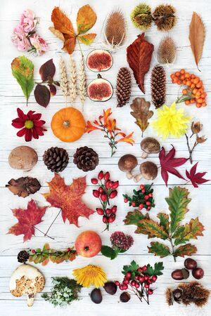 Autumn nature composition for botanical study with food, flora & fauna on rustic white wood background. Harvest festival theme.