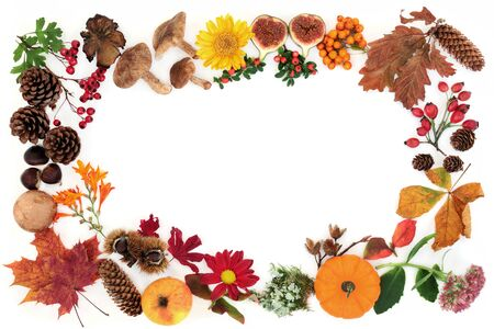 Autumn abstract background border composition with food, flora & fauna on white with copy space. Harvest festival concept. Flat lay, top view. Imagens - 135294975