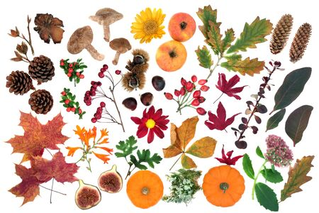Nature study in Autumn with a large selection of food, flora and fauna on white background. Top view. Harvest festival theme. Imagens
