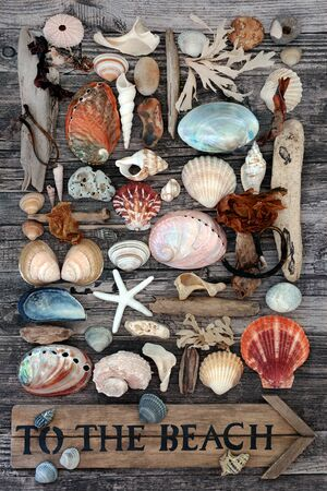 Seashell, driftwood, seaweed and pebble abstract collage on a rustic wood background with an old to the beach sign. Flat lay. Zdjęcie Seryjne