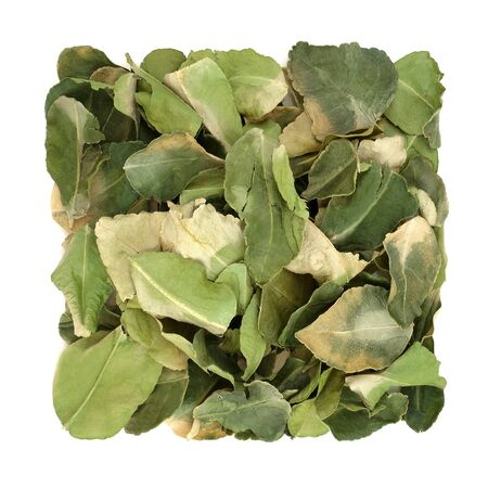 Kaffir lime leaf herb used in herbal medicine used for oral health, boost skin health, detoxify the blood, indigestion, flatulence, dandruff, nausea, on white background. Citrus hystrix.