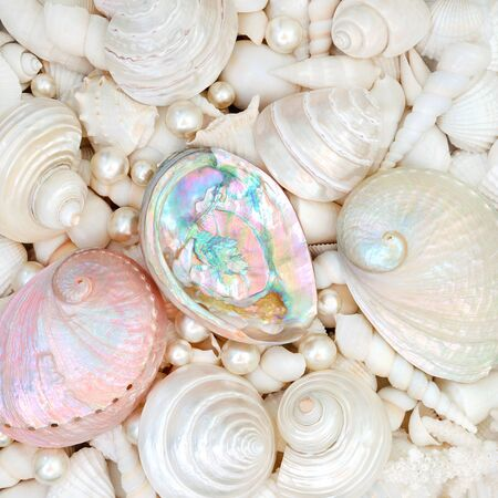 Seashell abstract background with mother of pearl seashells and a variety of smaller white shells. Flat lay.