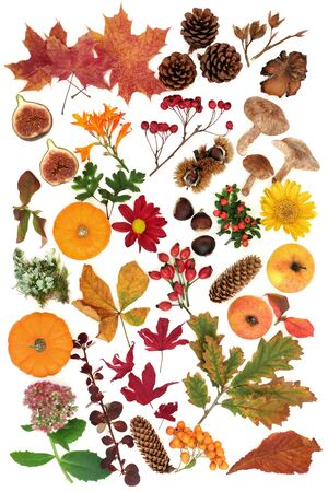 Autumn nature study with a large selection of food, flora and fauna on white background. Top view. Harvest festival theme.