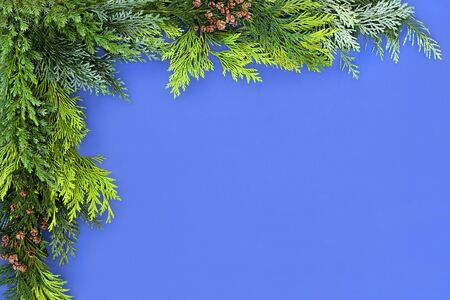 Winter greenery of cedar cypress leylandii & juniper fir leaves forming an abstract background border on blue. Seasonal composition for Christmas or New Year. Top view, flat lay, copy space. Foto de archivo