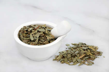 Boldo herb leaves in a mortar & pestle used in natural herbal medicine for gallstones, rheumatism, bladder infections, gonorrhea, liver disease, is anti bacterial & can reduce anxiety. Peumus boldo. Stock Photo