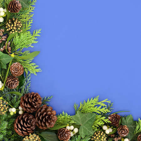 Traditional winter greenery background border with cedar cypress & juniper fir leaves mistletoe, ivy & pine cones on blue background. Composition for the Xmas & New Year. Flat lay, top view, copy space.
