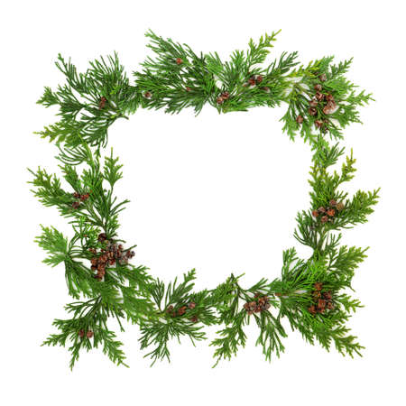 Cedar cypress leylandii fir winter greenery background border on white with copy space. Seasonal composition for the solstice, Christmas & New Year holiday period. Flat lay, top view.