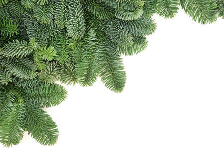 Spruce fir winter greenery background border for Christmas & New Year. Minimalist composition on white. Top view, flat lay, copy space.
