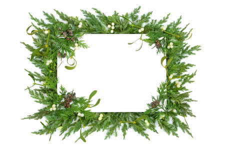 Mistletoe, juniper fir & cedar cypress leylandii winter greenery border on white with copy space. Traditional natural flora for the Christmas & New Year season. Top view, flat lay.