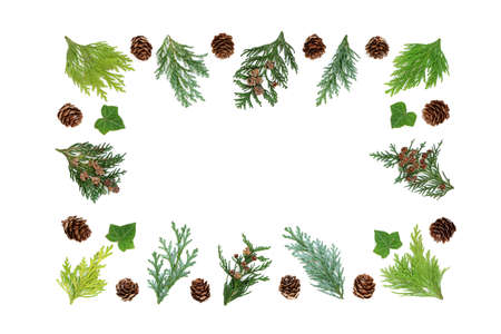 Cedar cypress fir, pine cones  & ivy leaves abstract border on white background. Top view, flat lay, copy space. Zdjęcie Seryjne
