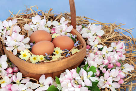 Freshly laid brown eggs & apple blossom with primrose flowers in a wooden basket on straw on mottled blue background. Fresh food health concept.