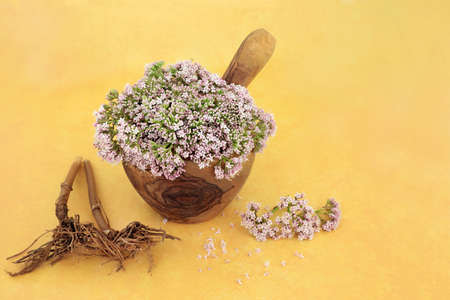 Valerian herb flowers in a mortar and pestle and dried root. Used in herbal medicine to treat insomnia, anxiety, headache, digestive problems, menopause symptoms, muscle pain and fatigue. Valeriana