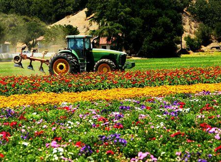 新鮮なカラフルな花の分野でのトラクター
