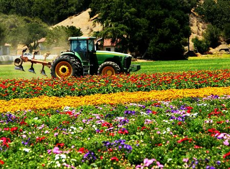 agriculture machinery: Tractor in field of fresh colorful flowers