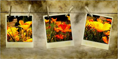 color photographs: Beautiful Poppy Flower Photos Hanging On Line With Clothespins Stock Photo