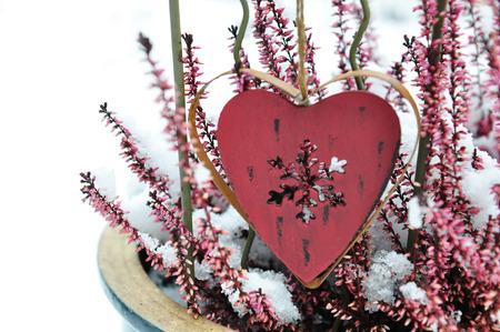 erica: garden christmas decoration with snow