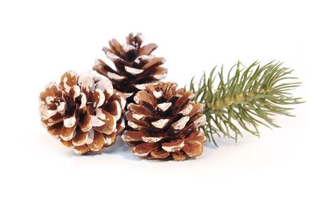 jahreswechsel: fir cones on white background
