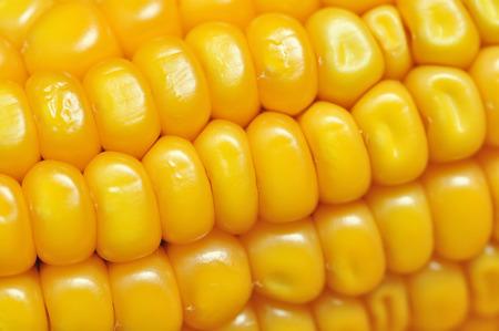 corncob: detail of a ripe corncob Stock Photo