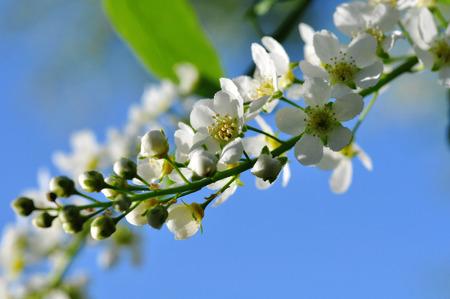knospe: flower in front of blue sky