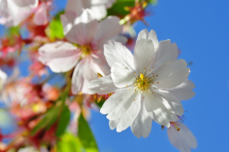 flower in front of blue sky photo