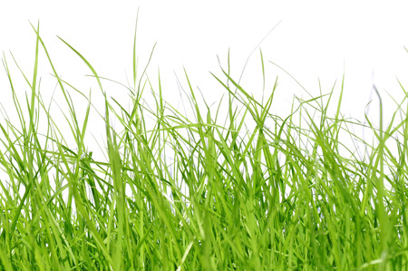 hintergrund: young grass in front of white background Stock Photo