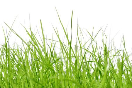 jong gras voor witte achtergrond