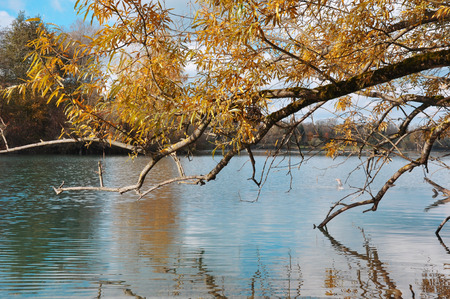 zweig: turquoise lake with autumn leaves