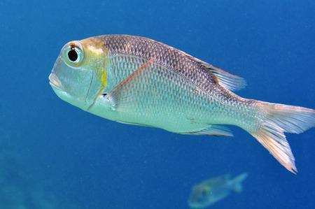 Onderwaterwereld van de Malediven Stockfoto