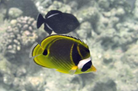 Underwater World van de Malediven Stockfoto
