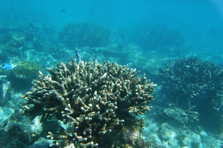 Onderwater Wereld Malediven, koraalrif