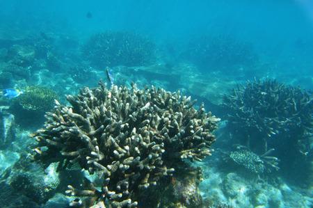 tourismus: Underwater World Maldives, coral reef