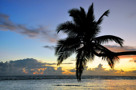 tourismus: curved coconut palm on the sea Stock Photo