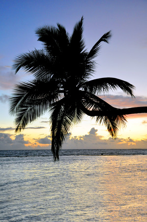 pflanze: curved coconut palm on the sea Stock Photo