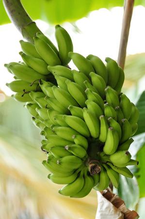 Detail of banana fruit stand Standard-Bild