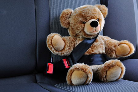 sch: Teddy belted in the car