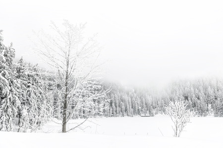 winter hike in the northern Black Forest on a foggy day 版權商用圖片 - 35851027