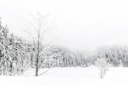 winterwandeling in het noordelijke Zwarte Woud op een mistige dag