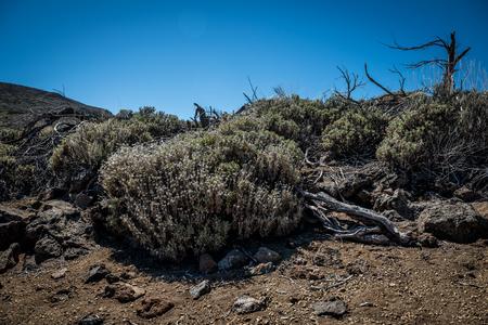 Las Canadas del Teide - nationaal park