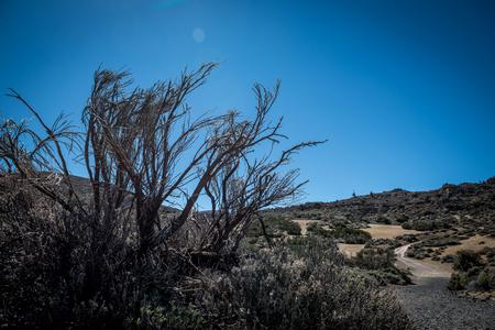 Las Canadas del Teide - national park