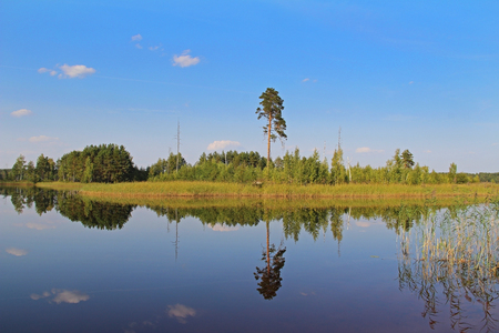 Silhouettes of trees are reflected in the forest lake. Fantastic landscape. Unusual and picturesque scene. Beauty world. Russia.