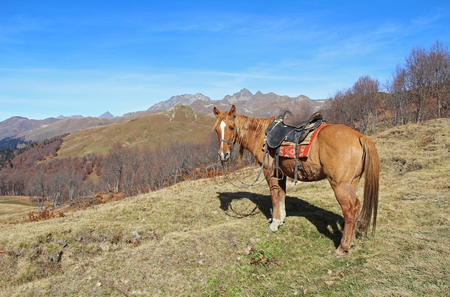 Horse on a background of yellow autumn hills and mountains. The photo was taken in the valley of the seven lakes, the Republic of Abkhazia.
