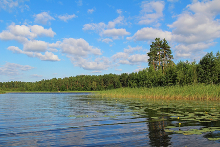 Fantastic landscape with water lilies on a forest lake. Unusual and picturesque scene. Beauty world. Russia. 写真素材