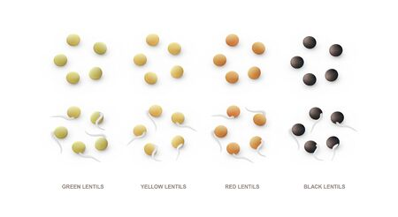 Set of realistic green, yellow, red, blue lentils and sprouts. Vector illustration isolated on white background.