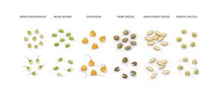 Set of green buckwheat, mung, chickpeas, hemp, sunflower seeds, lentils. Vector illustration.